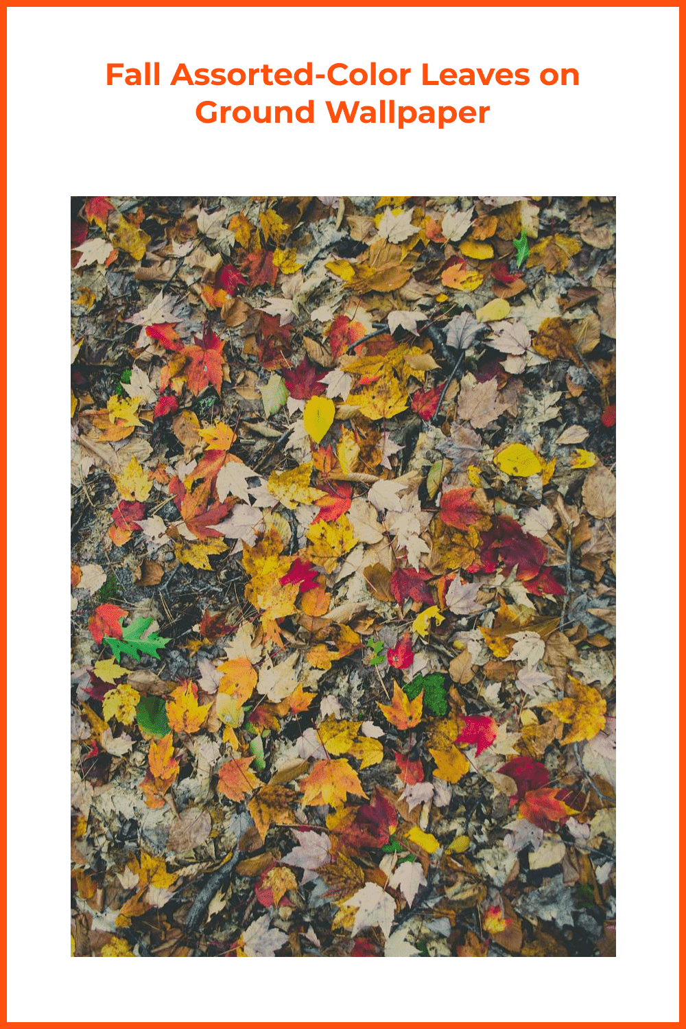 Multi-colored leaves on ground wallpaper