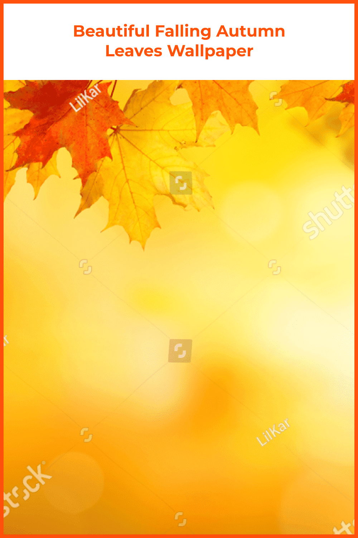 Beautiful falling autumn leaves wallpaper.