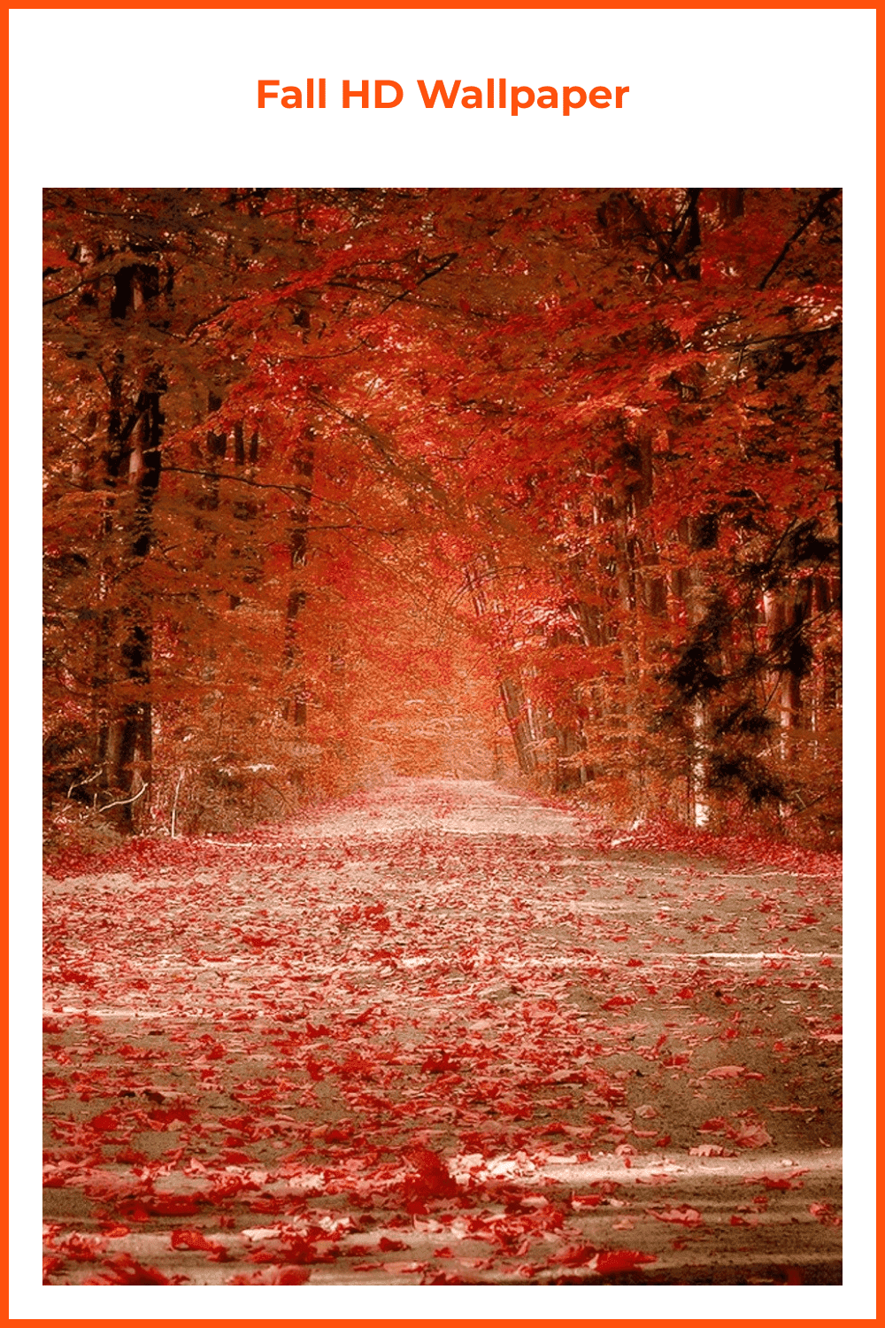 Red fall in the forrest.