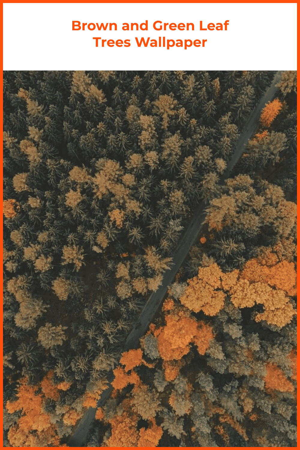 Wallpapers brown and green leaf tree fall.