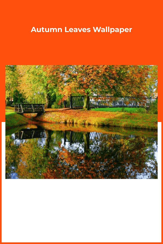 Beautiful fall in the park.