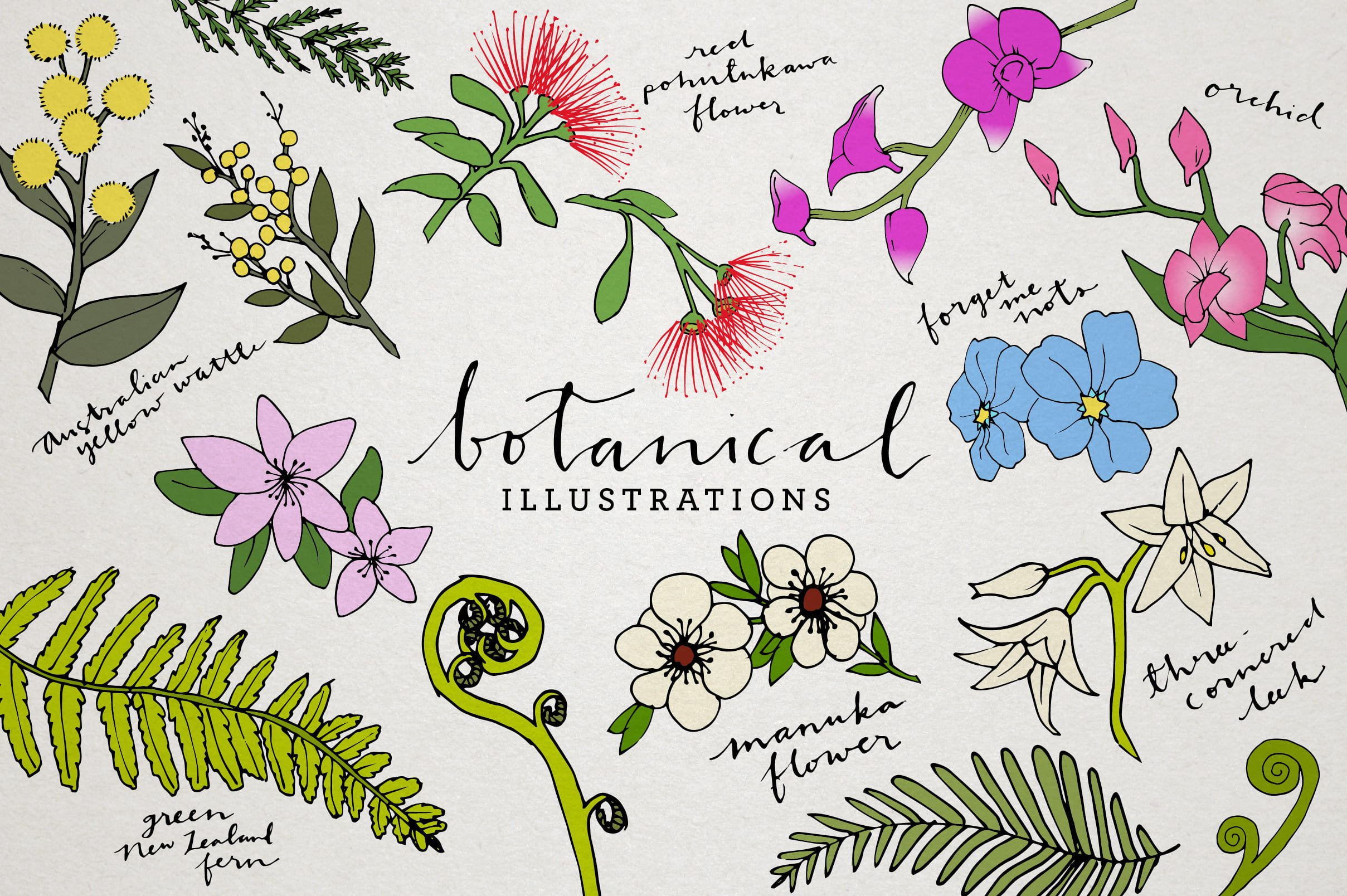 Hand-drawn flowers illustration. Here you will find all plant species.