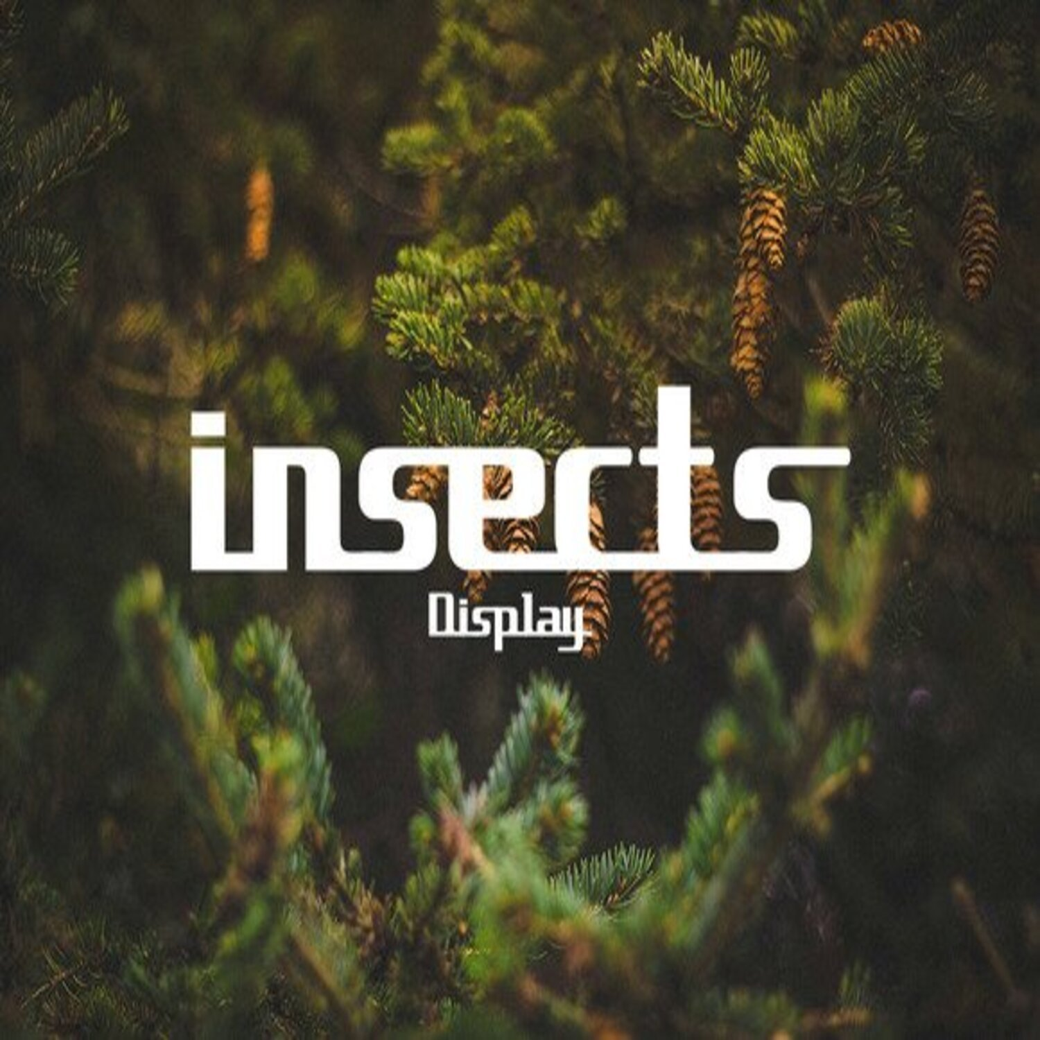 Insects Strong Display Font main cover.