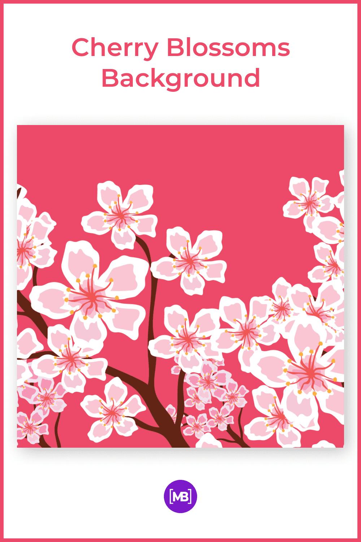 Big cherry blossoms.