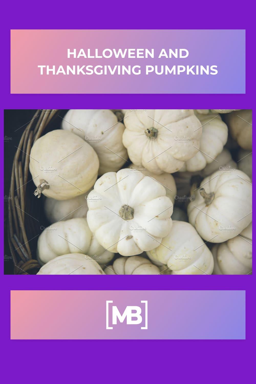5 Halloween and thanksgiving pumpkins