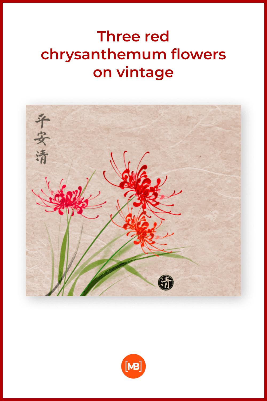 Three red chrysanthemum flowers on vintage.
