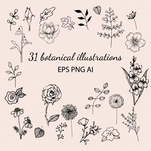 botanical masterbundle1