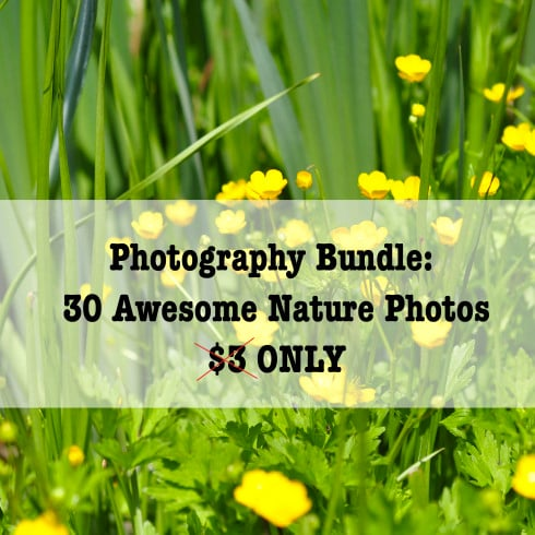 Photography Bundle: 30 Awesome Nature Photos – $1 ONLY