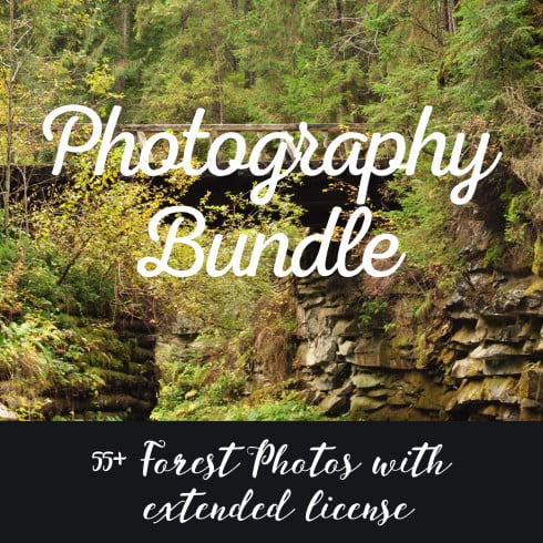 55+ Forest Photos with Extended License. Photography Bundle - 4909 490x490
