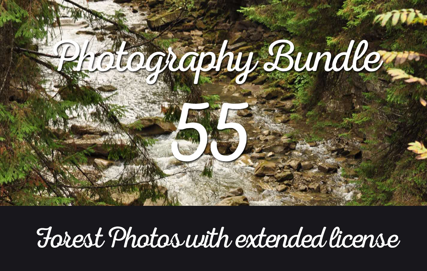 Photography Bundle: 55+ Forest Photos
