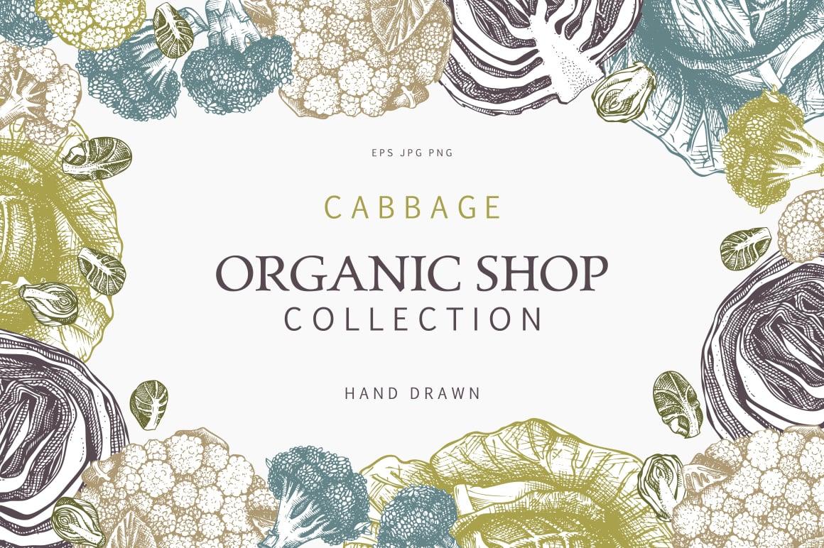 cabbage_pr
