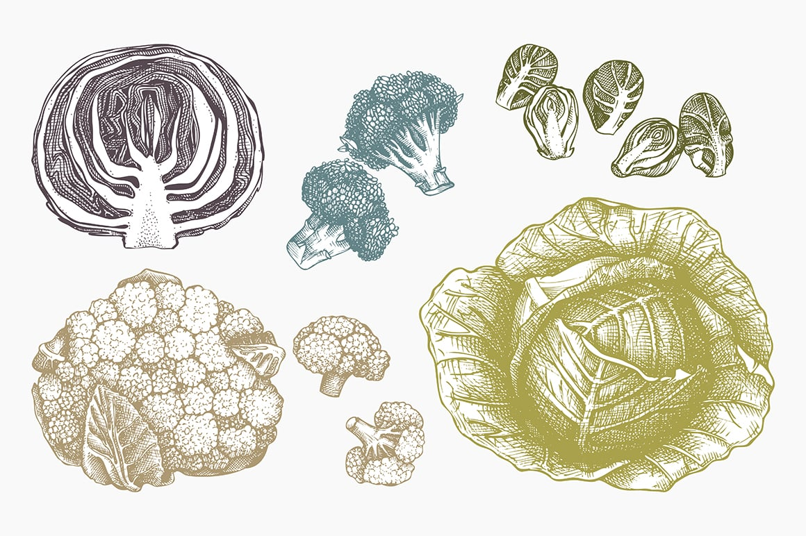 Vintage vegetables elements - Ink hand drawn sketch collection