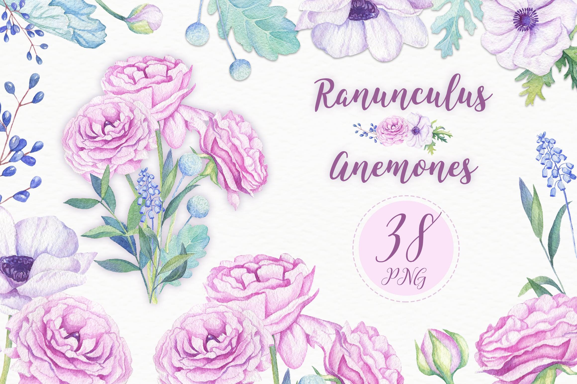 Ranunculus & Anemones Flowers