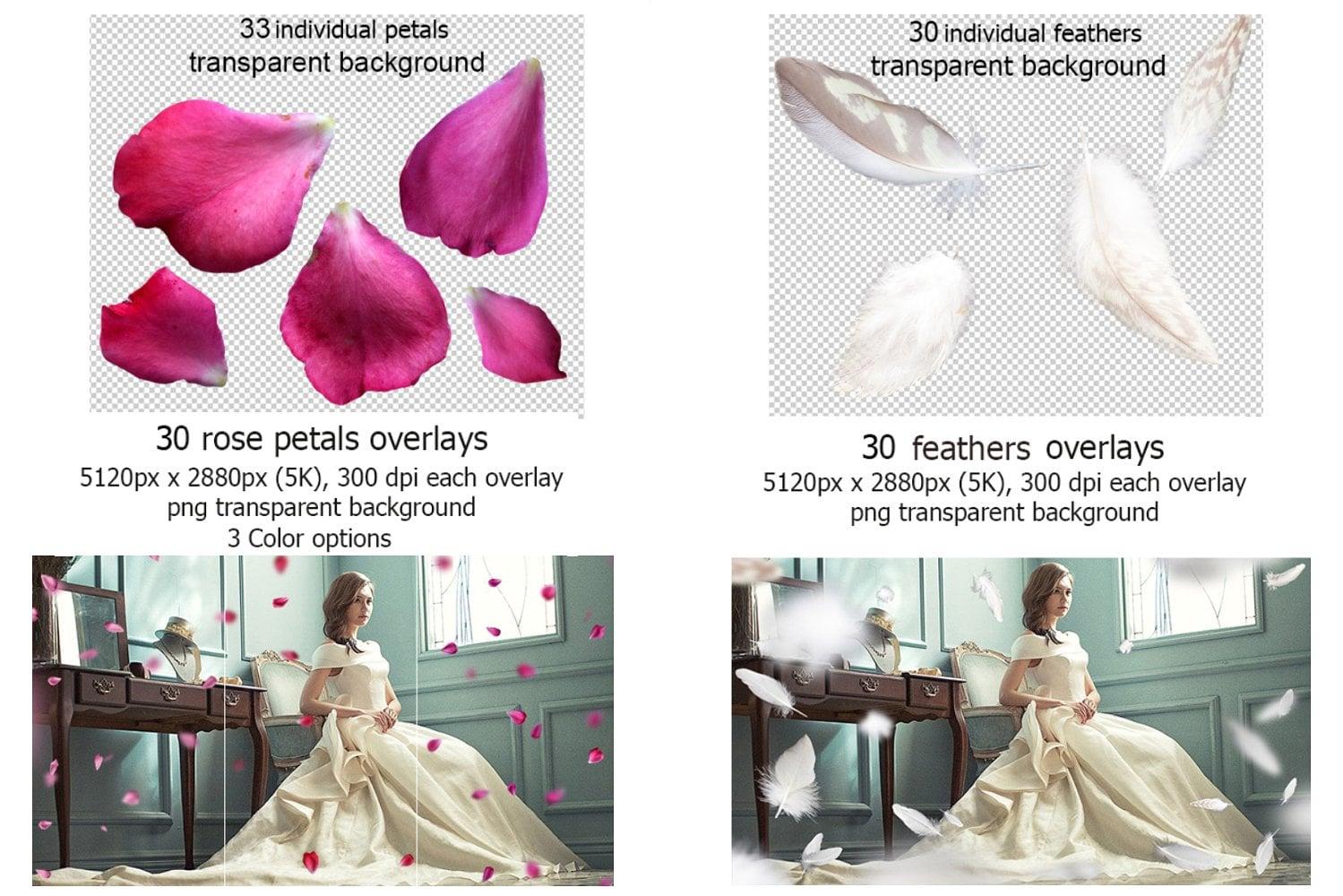 Rose Petals Photo Overlays