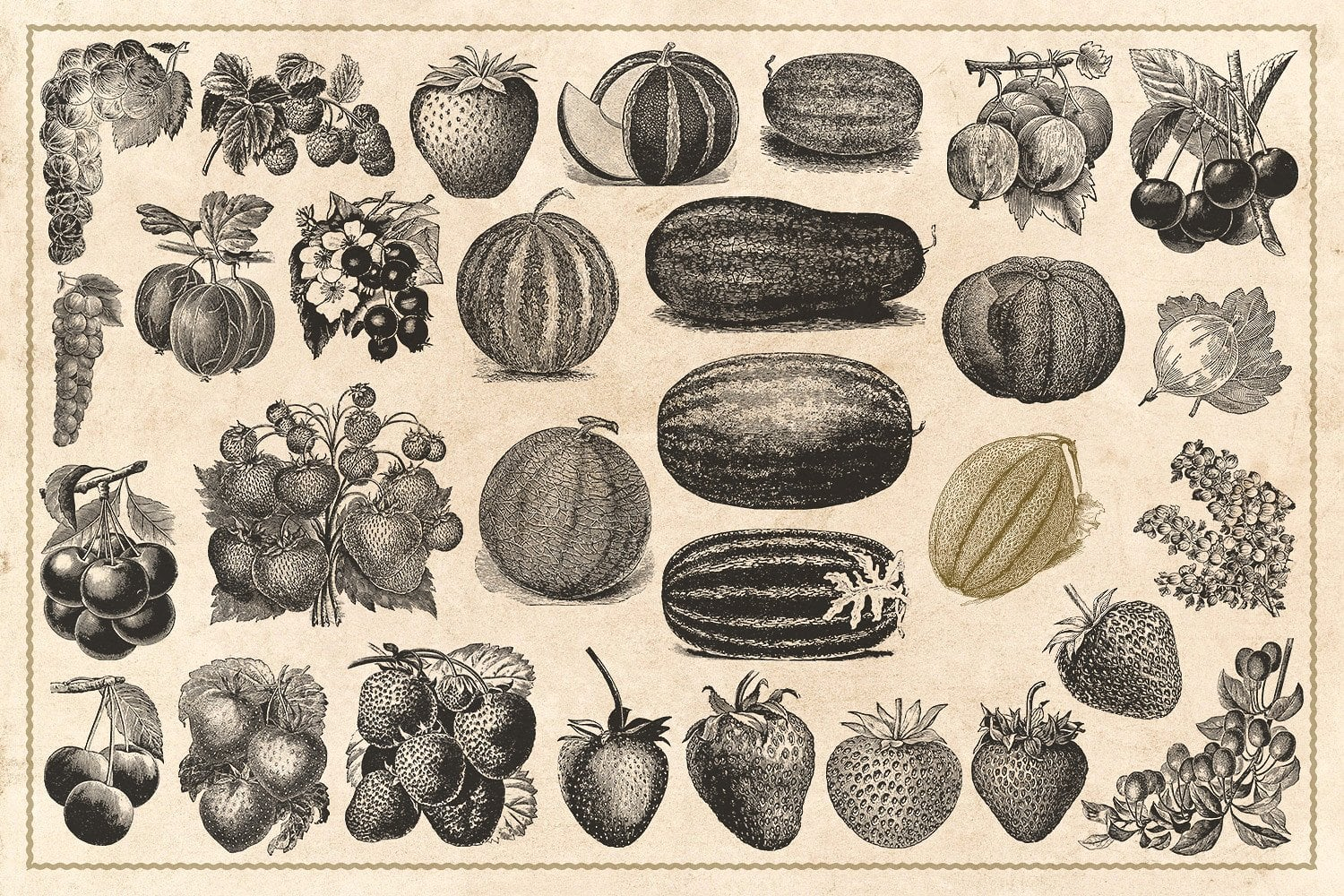 120 Vintage Fruit and Nuts