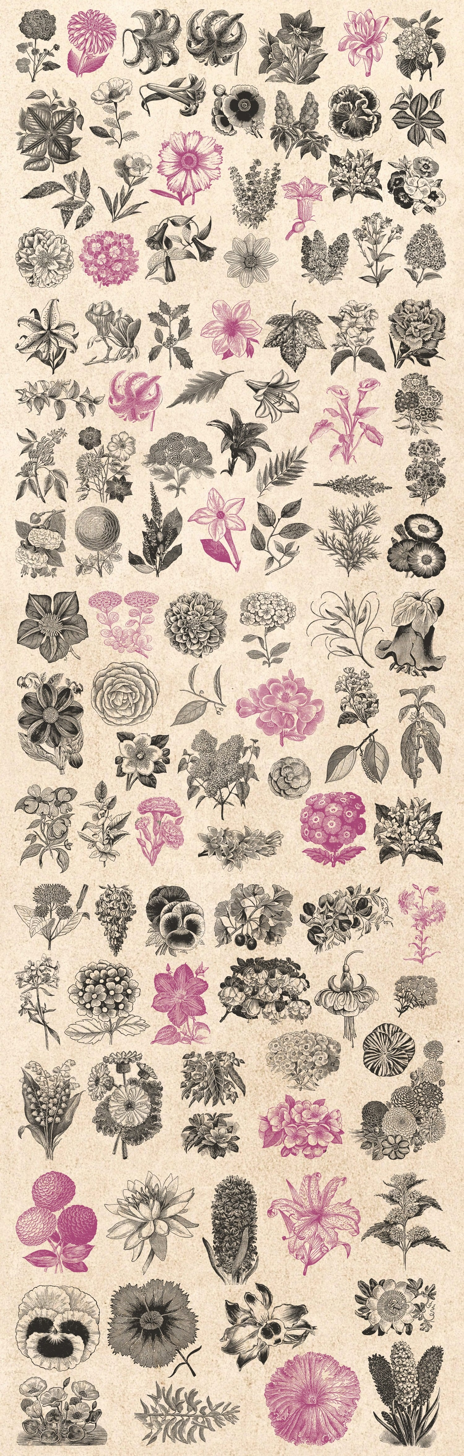 1000 Vintage Illustrations with 80% OFF - 8 flowers1
