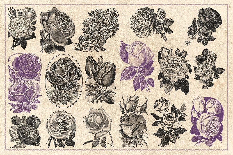 70 Vintage Rose Illustrations