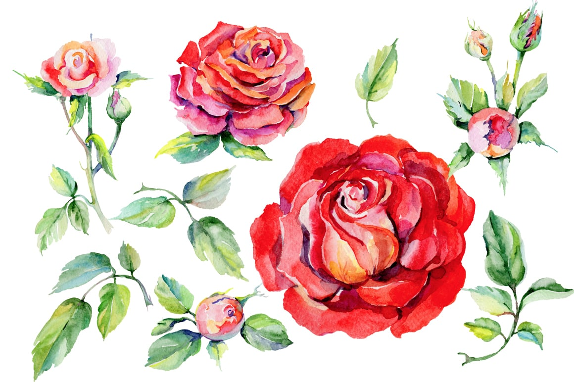 Roses watercolor flowers – just $2Master Bundles | Master Bundles