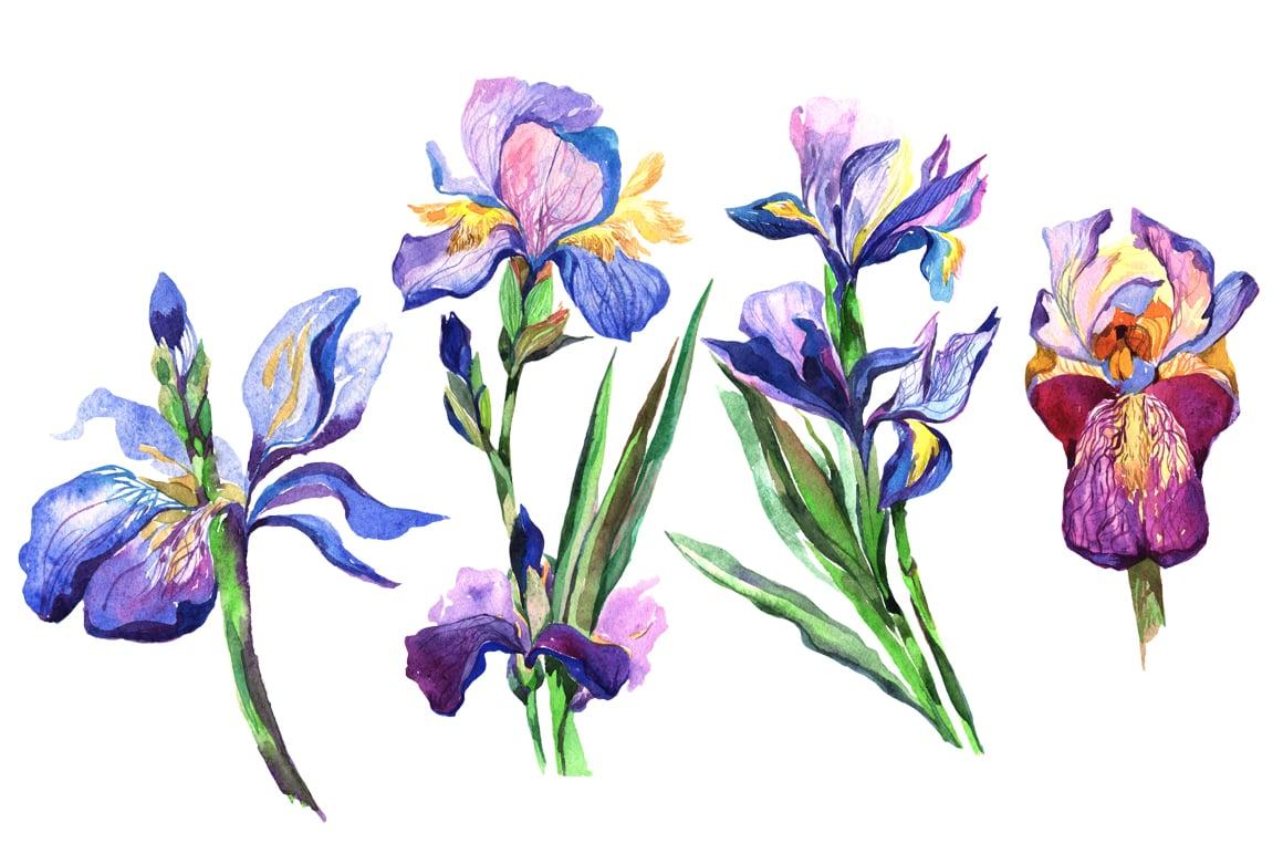 Irises PNG watercolor flowers set