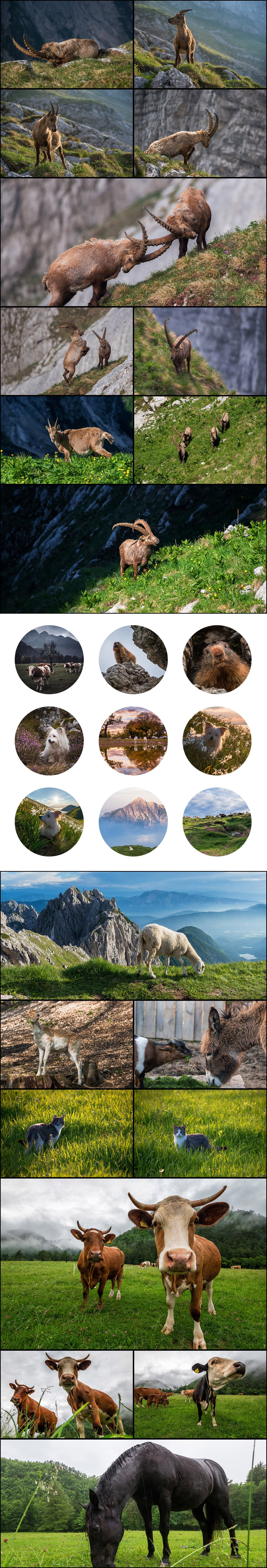 500+ Stock Images. Ultimate Photo Bundle  – $59 - PREVIEW animals1