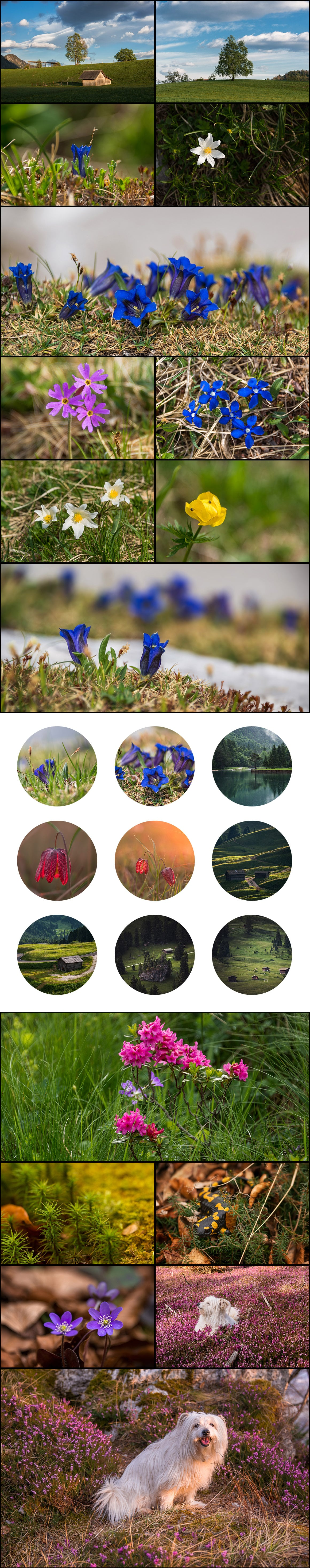 500+ Stock Images. Ultimate Photo Bundle  – $59 - PREVIEW nature1