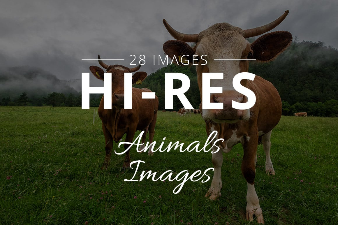 500+ Stock Images. Ultimate Photo Bundle  – $59 - THUMB animals