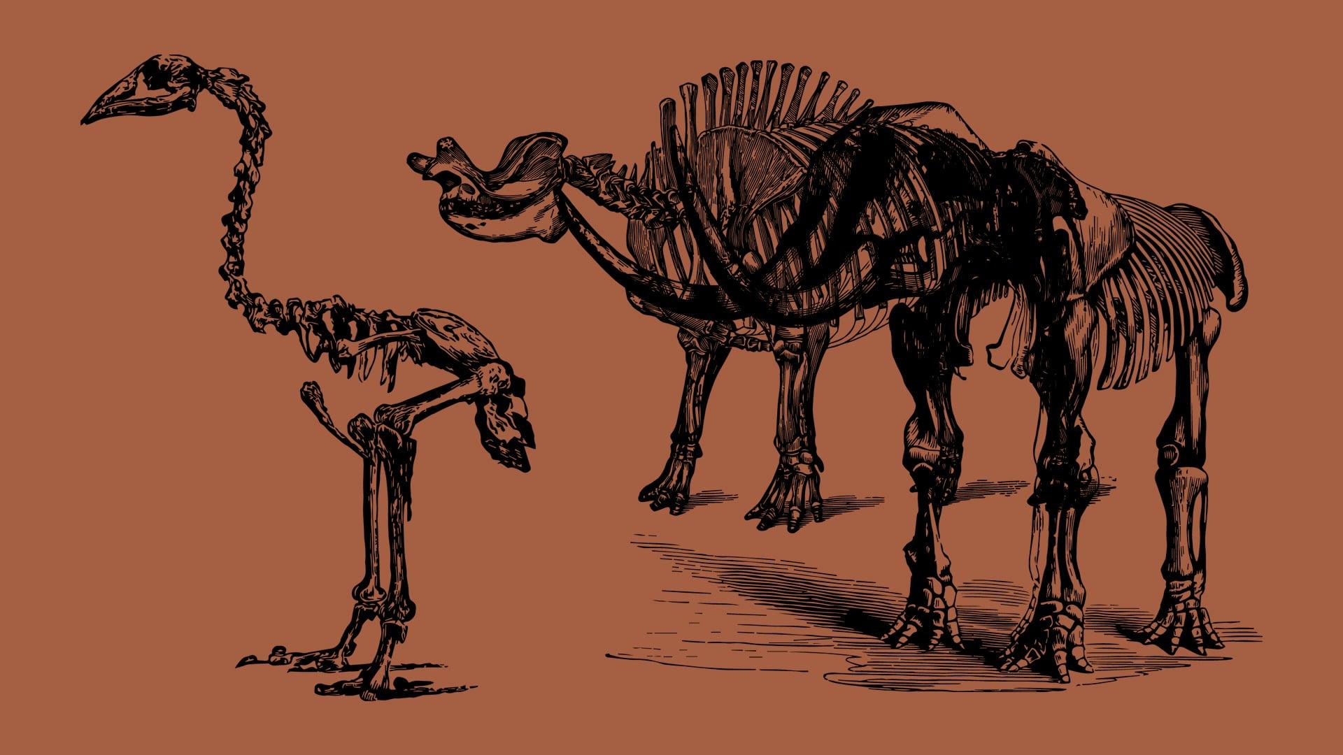 Vintage Paleontology Vector Illustrations