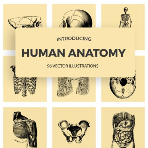 96 Vintage Anatomy Illustrations 2020: Human Anatomy Vectors - 490 3 490x490