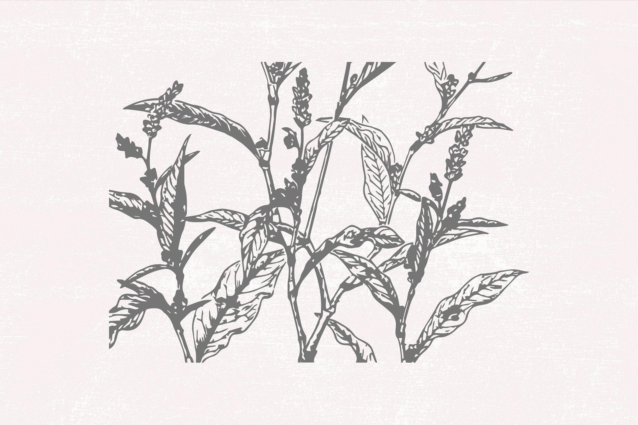 Stem of wildflowers close up.