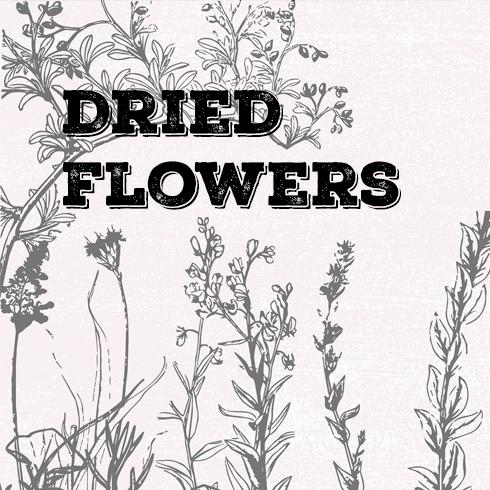 Vintage Botanical Illustrations main cover.