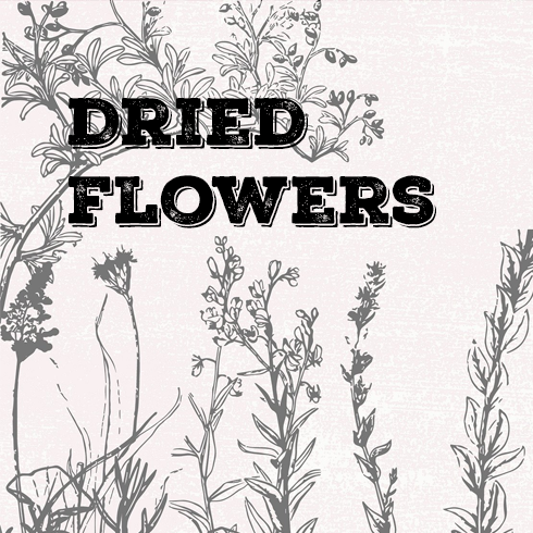140 Vintage Botanical Illustrations 2020 - Dried Flowers, Petals, Shoots [EPS + PNG] - flowers 1