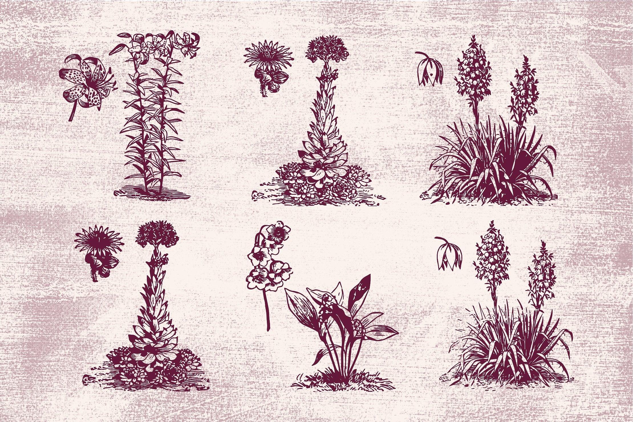 96 Floral Vintage Vector Illustrations [96 Items, EPS + PNG] - flowers 5