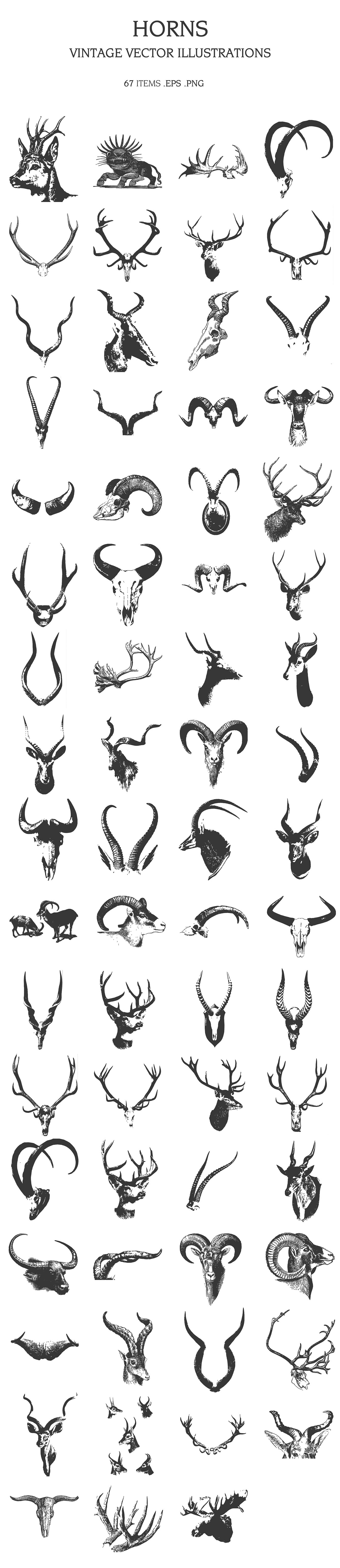 Horns of different breeds of animals.