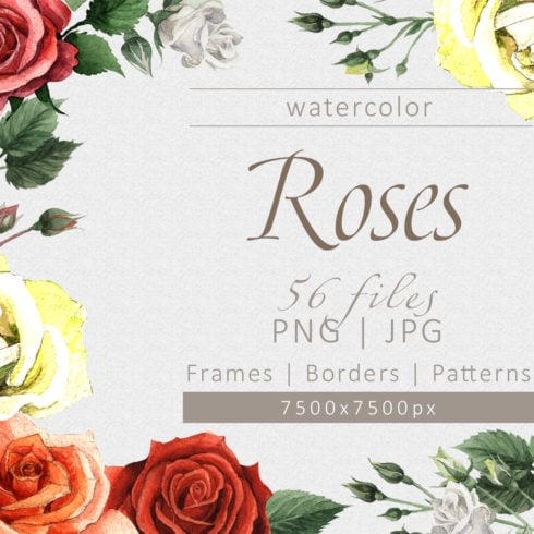 Colorful roses PNG watercolor set - promo 1 1 490x490