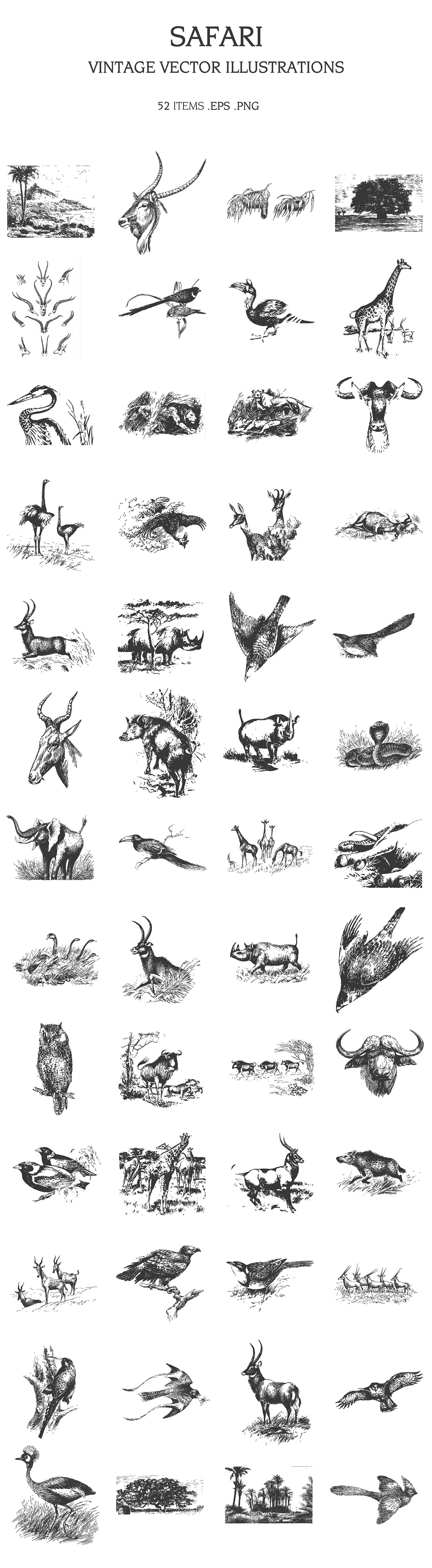Part of the animal world drawn in black pencil.