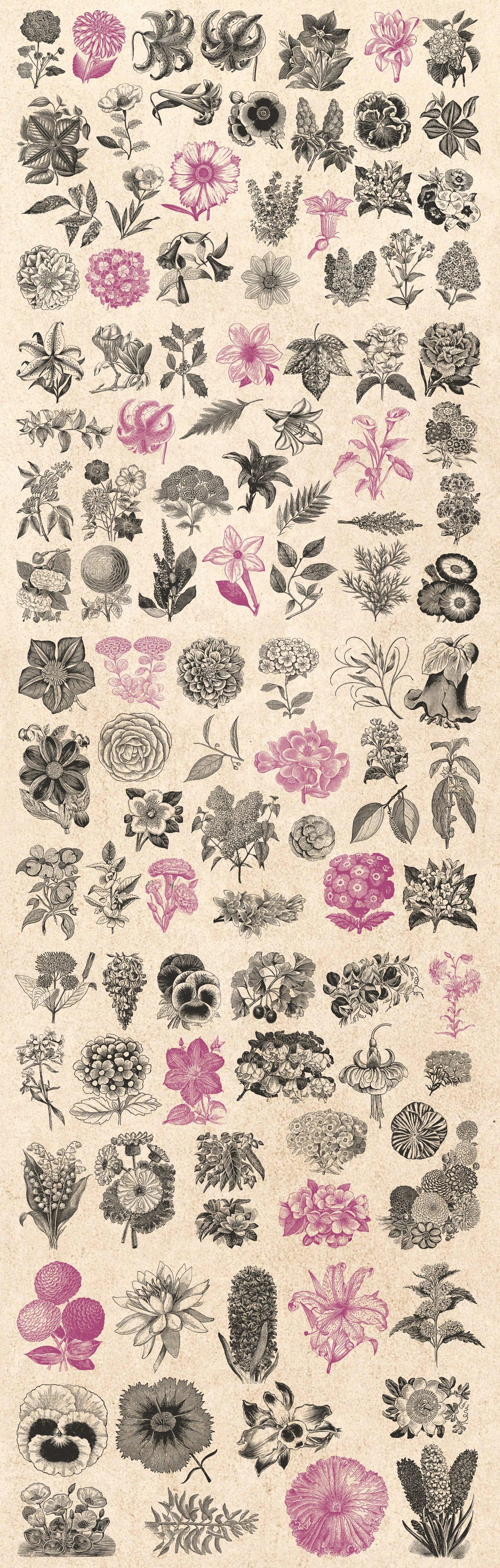 Floral Illustrations vintage