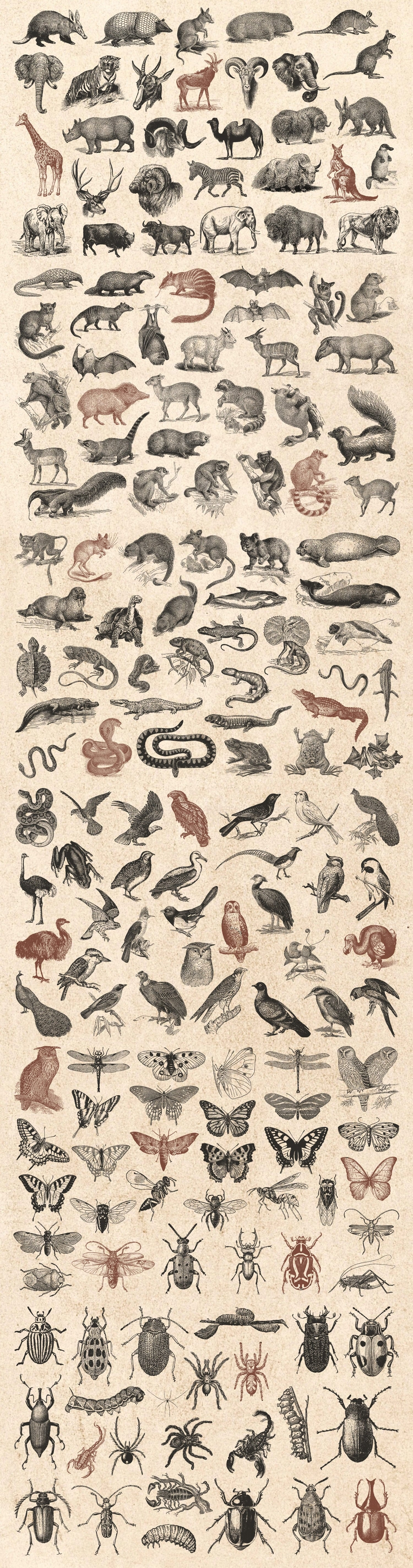 wild Animals vintage illustration