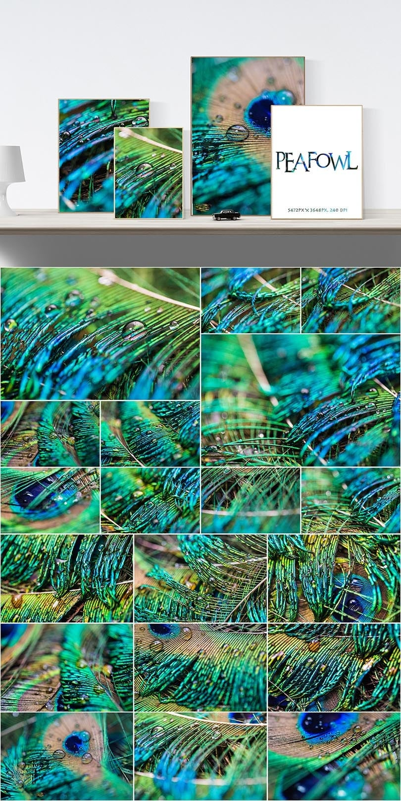 Digital Art Collection - $29 ONLY - 46 Peafowl