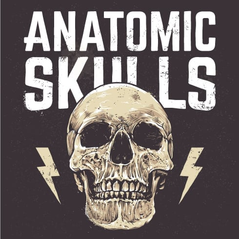 Anatomic Skulls | Vector Pack - only $10 - Preview 1 490