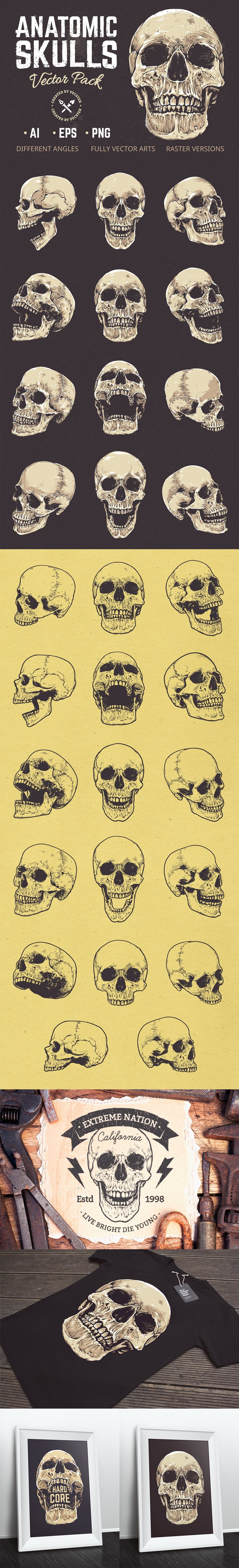 Anatomic Skulls | Vector Pack - only $10 - Preview 4 full