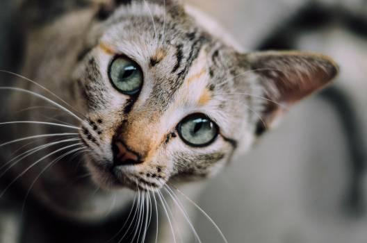 The Stock Photos Mega Bundle - Dogs Cats 007