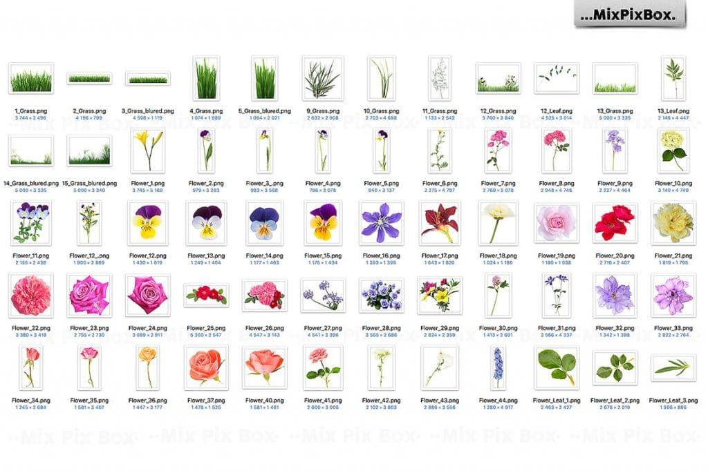 Grass and Flowers Photo Overlays - $9 - 2 2