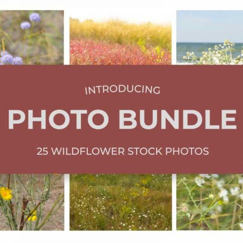 25 WildFlowers Stock Photos - $3 - 600 18 490x490