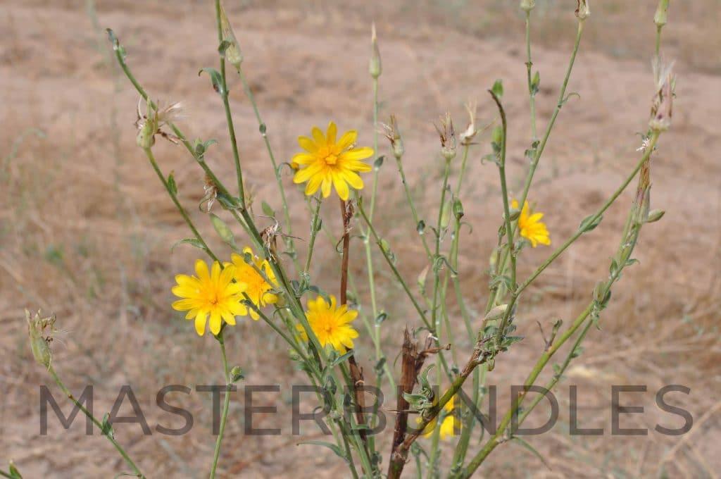 25 WildFlowers Stock Photos - $3 - DSC 1772 copy