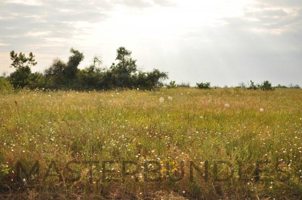 25 WildFlowers Stock Photos - $3 - DSC 1863