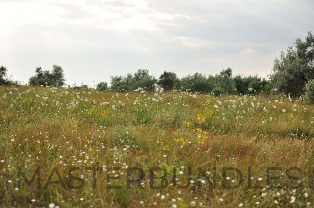 25 WildFlowers Stock Photos - $3 - DSC 1865