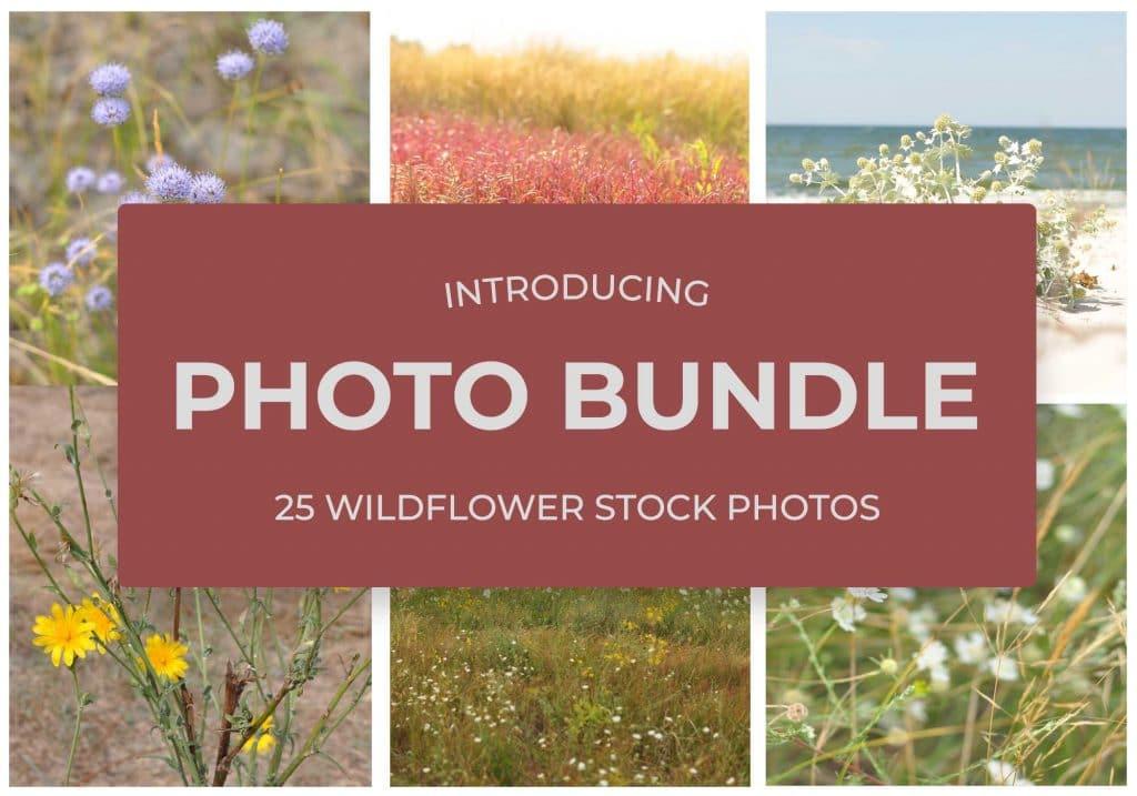 25 WildFlowers Stock Photos - $3 - Photo 1