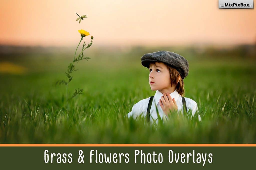 165+ Best Gifts For Photographers 2020! - grass and flowers first image