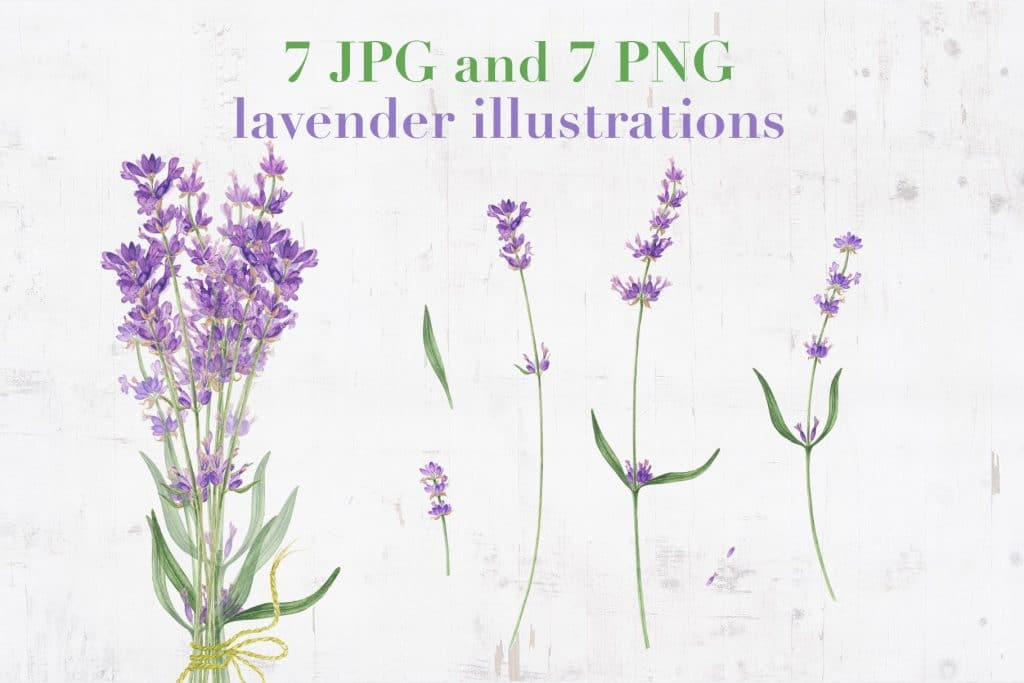 Provence: Lemons and Lavender Clipart - $14 - 01
