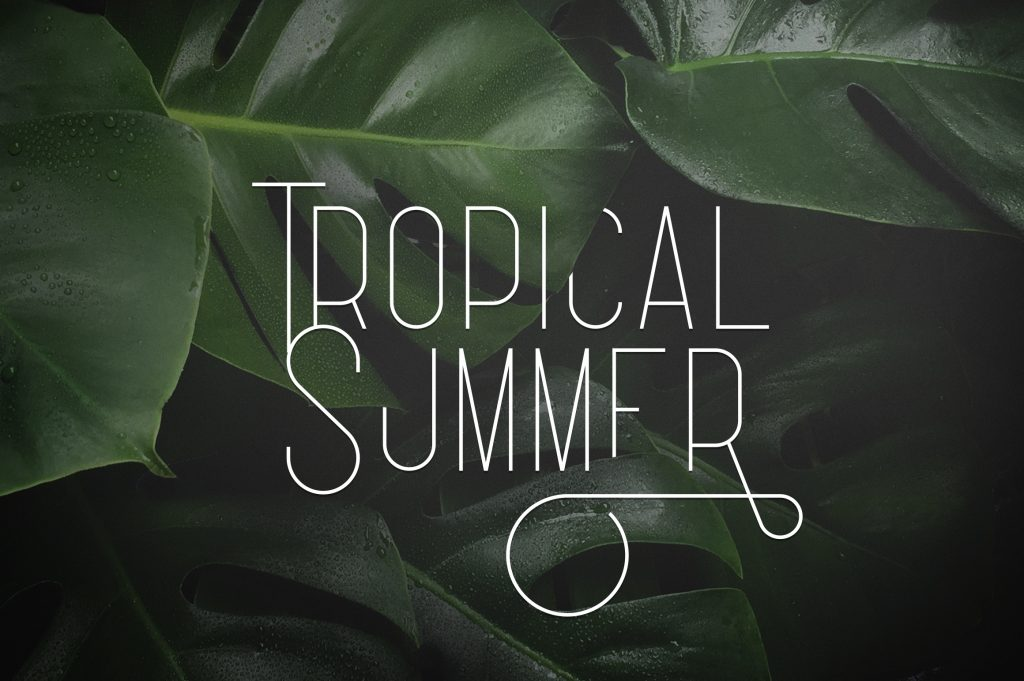 50+ Best Tropical Fonts 2021: Free and Premium 🌴 - 2 9